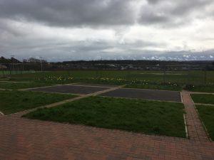 Daffodils Parc Derwen, Coity